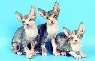 Котячий комплекс своими руками, или как мы делали котодом для нашей