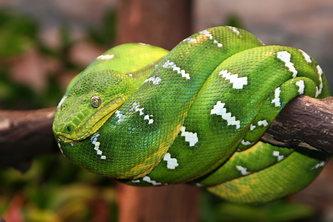 Содержание змеи дома