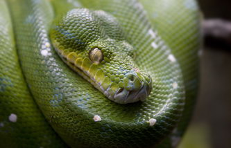 Содержание змей в домашних условиях